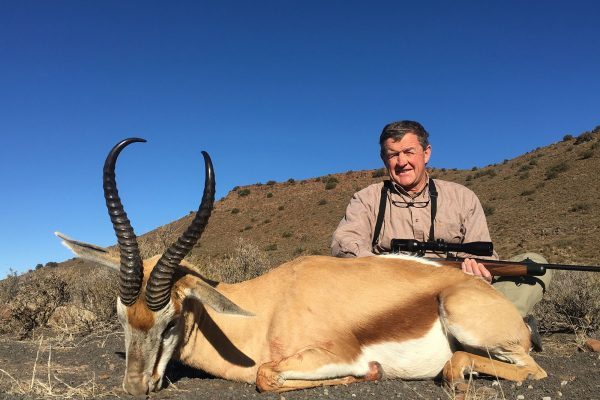 Common Springbok